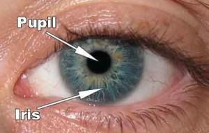 Fungsi Iris Mata atau selaput Pelangi