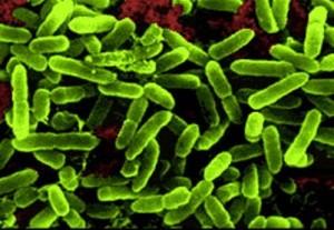 Pengertian Bakteri dan Fungsinya