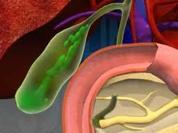 Fungsi Empedu dalam Organ Tubuh Manusia