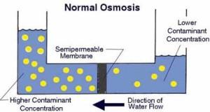 Pengertian Osmosis dan Fungsinya