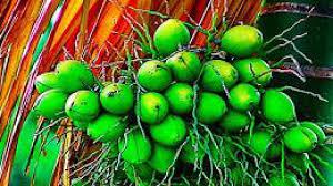 Manfaat buah Jambe bagi kesehatan